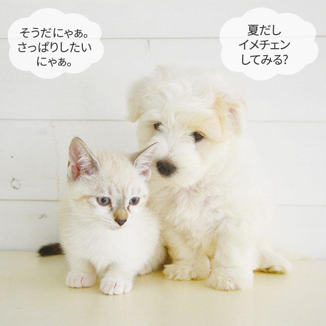 犬猫兼用シェーディングブラシ 【合わせ買い対象】