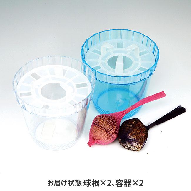 フラワーフェア 復刻版ヒヤシンスの水栽培2個セット