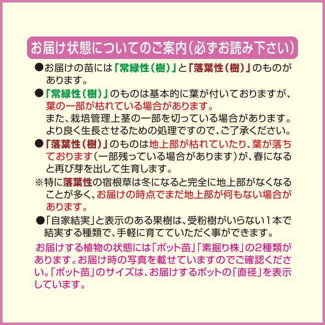 フラワーフェア 礼文モジズリ(礼文ネジバナ) 2株